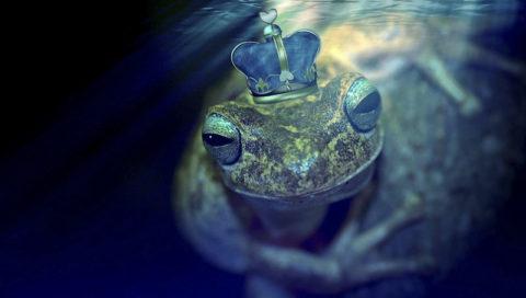 žaba v rybniku