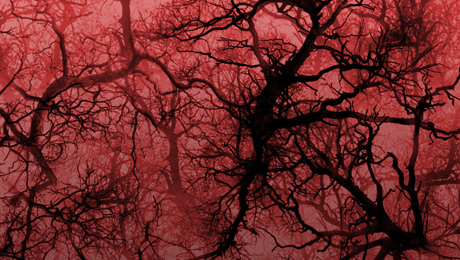 červené stromy