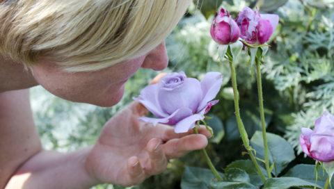 růže žena čichání