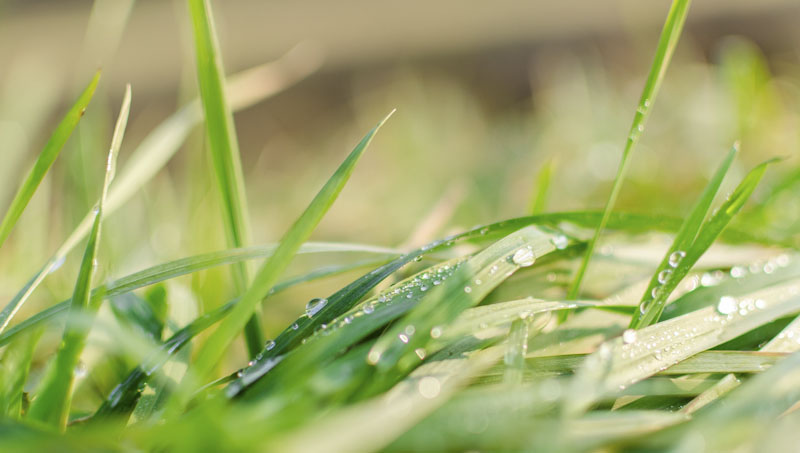 Trava letní