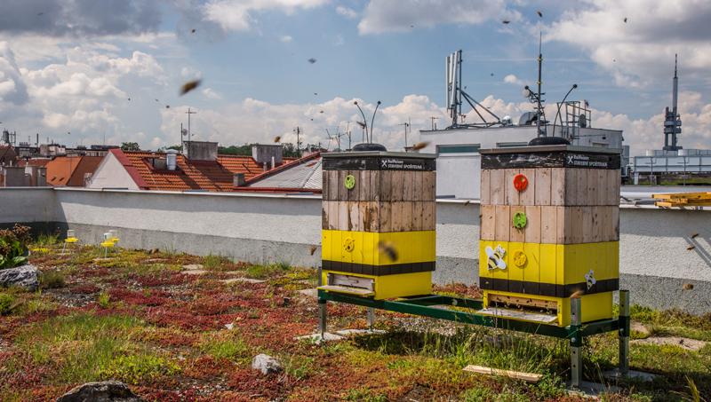 Včely v Klimentské ulici