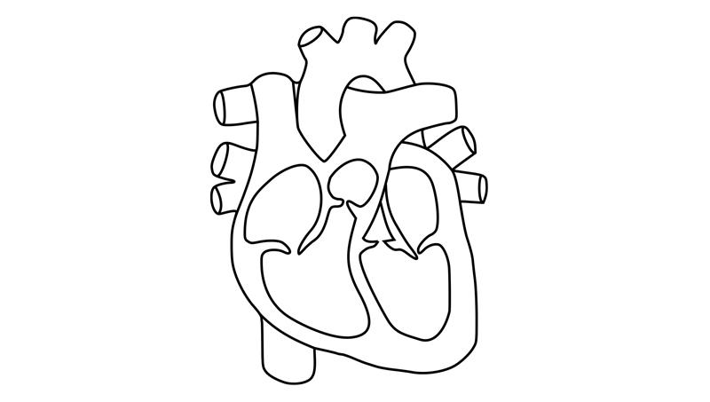 srdce schema